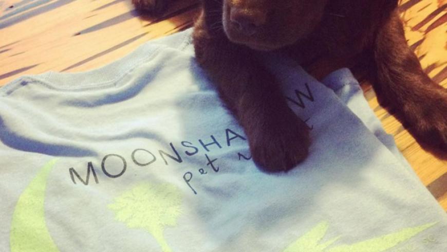 Branding, T-Shirts: Moonshadow Pet Resort