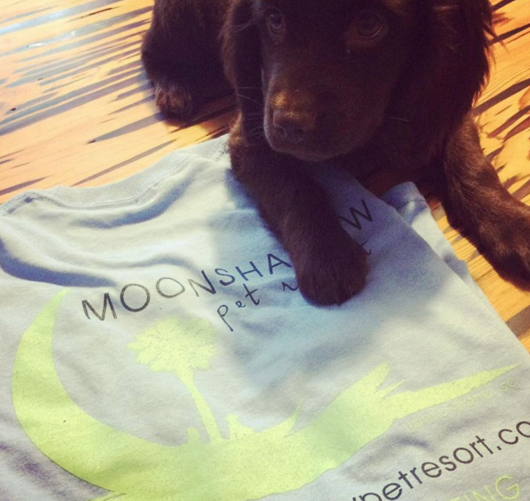 Branding, T-Shirts: Moonshadow Pet Resort